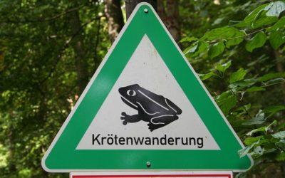 Frosch- und Krötenwanderung