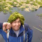 Gründe für Algen